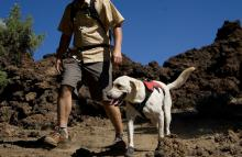 How to give your dog the best day in Lake Tahoe